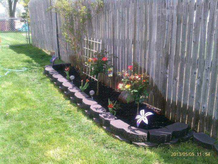 rose garden w 2 new playboy rose trees added amp few matching tulips, gardening