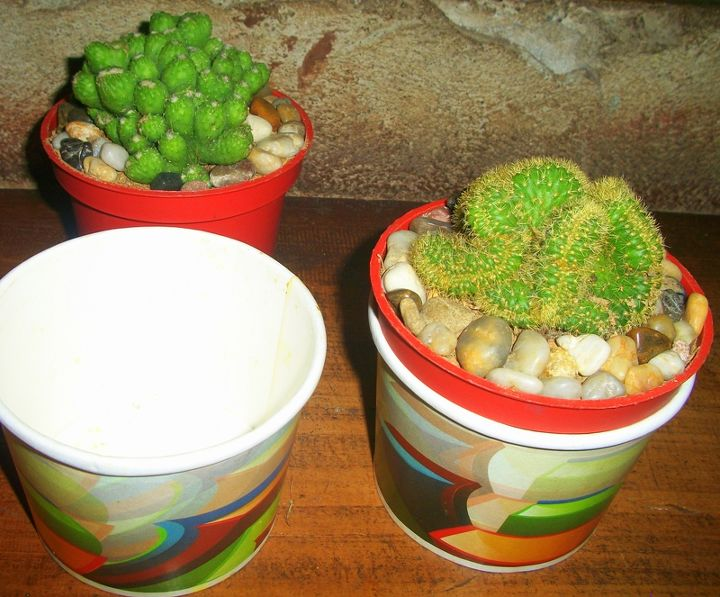 simply slid each of the cacti planters in the food cups