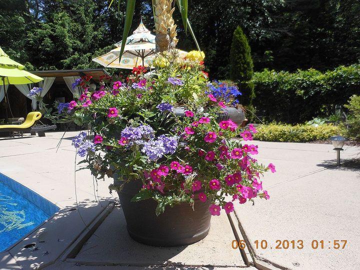 planters around our pool area, gardening