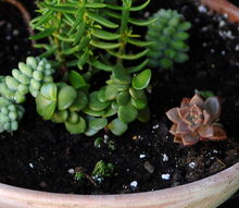 the secrets of succulents, flowers, gardening, succulents