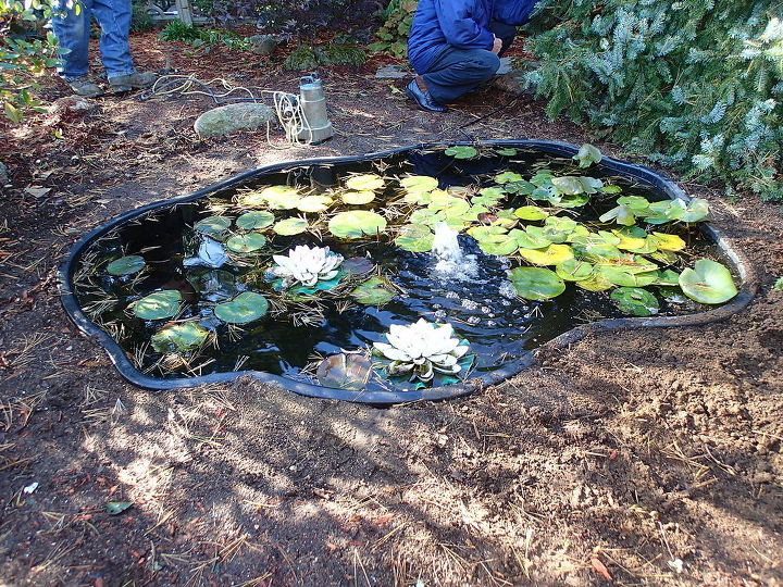 Pond Makeover, in MA  Before