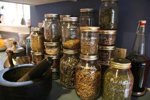 harvesting and preserving herbs, gardening, Storing preserved Herbs in mason jars