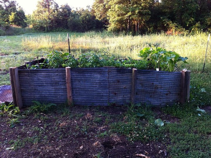 red neck raised bed, gardening, landscape, raised garden beds, Old tin cedar posts composted horse manure