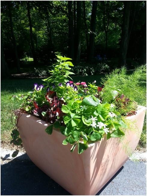 Stop by the blog to enter to learn all about planting a mixed container garden and to enter to win your own large Brolly container garden.