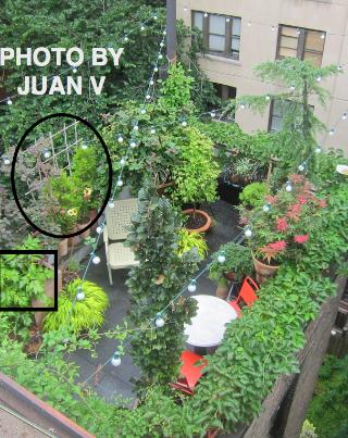 Juan V took this aerial photo on 7-10-13 @  https://www.facebook.com/photo.php?fbid=525173734198671&set=pb.247917655257615.-2207520000.1374134211.&type=3&theater