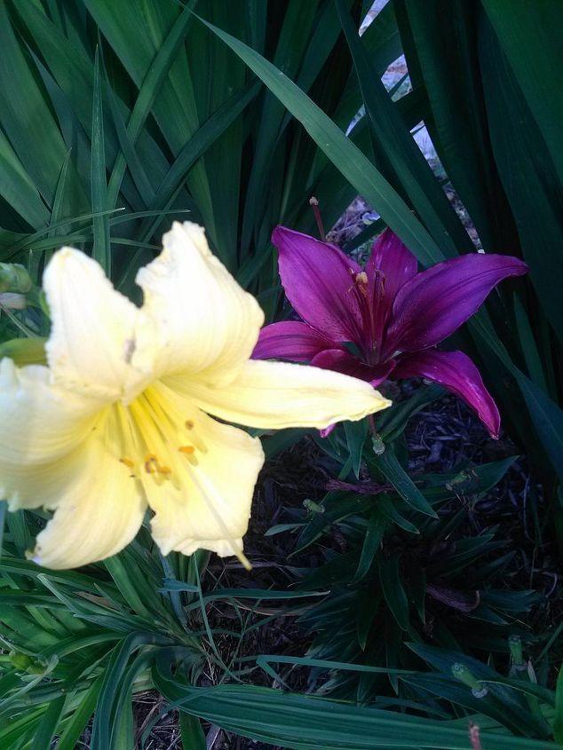 ponds and gardening, flowers, gardening, outdoor living