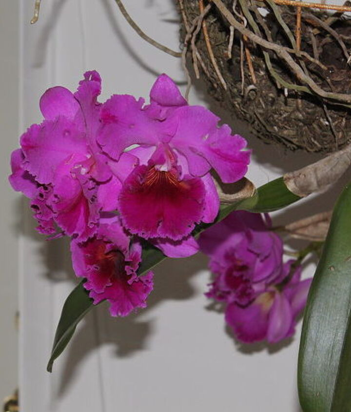 Close up of one Orchid.  The smell is awesome on this one.