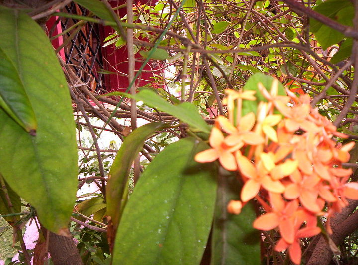 my minigarden, gardening