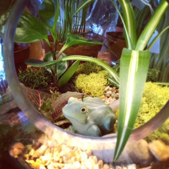 terrariums in all shapes and sizes, crafts, gardening, terrarium