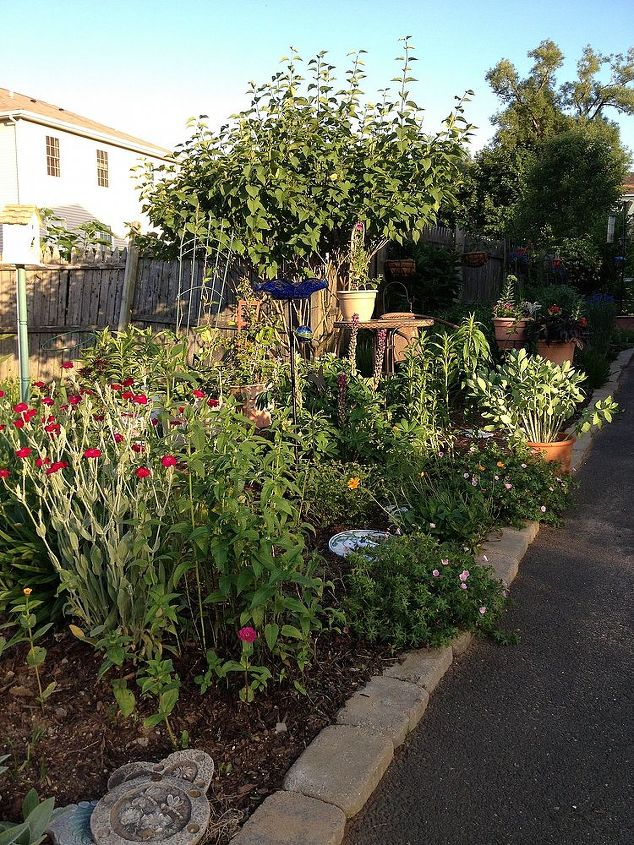 more garden and an extra sitting space to rest my bones, flowers, gardening, hydrangea