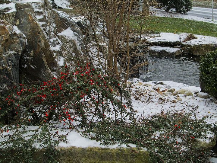 Christmas Holly Aside Pond