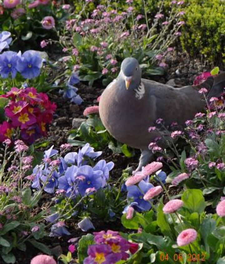 peaceful place, gardening