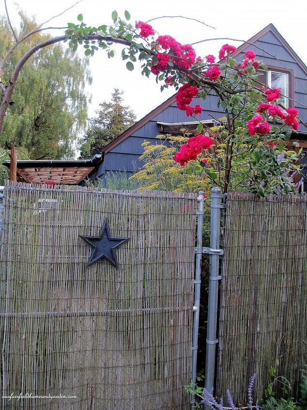 Diy Beautify A Chain Link Fence With Bamboo Hometalk