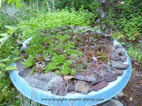 more junk gardening satellite dish planters, gardening, repurposing upcycling, Painted in my favorite Blue Fox Blue elegant and classically simple but so effective
