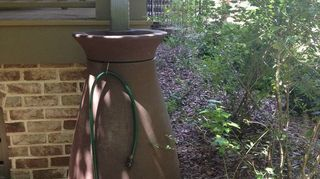 do you share views of your garden to encourage others to try it, flowers, gardening, perennials, Using Rain barrels to capture the rain to use for my plants and flowers