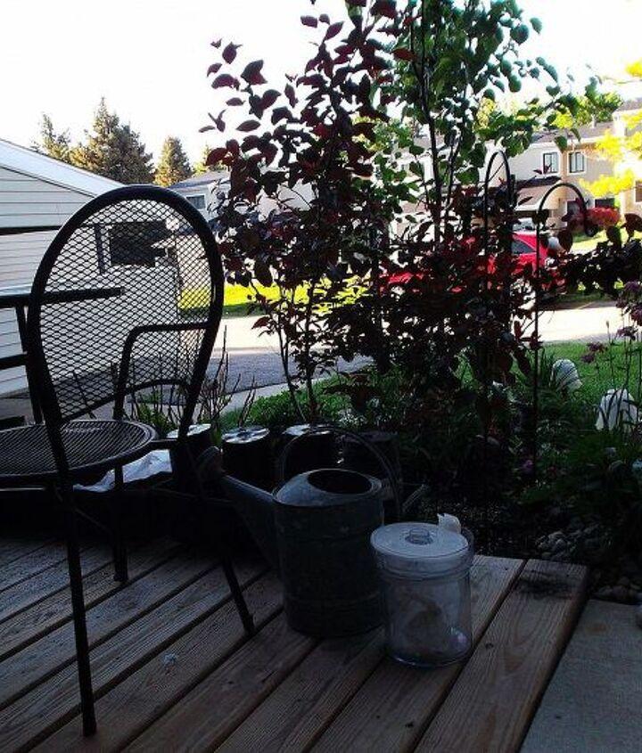 q cutting back mums, gardening