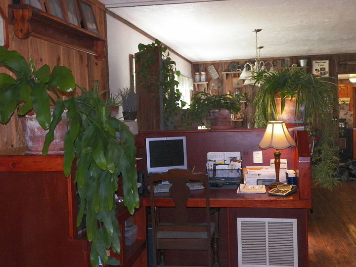 house plants have grown so big this summer, gardening