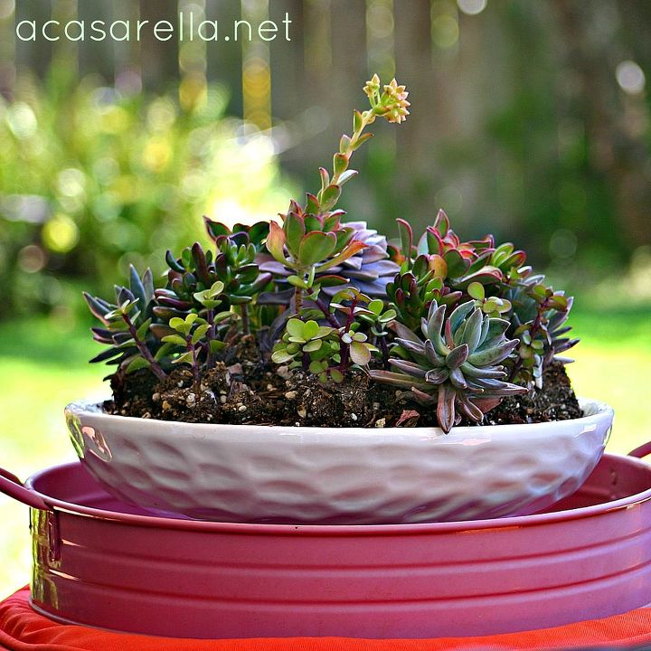 Succulents are suited to San Diego.  (Learn more here: http://www.acasarella.net/2012/04/i-suck.html)