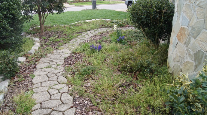 This is the old concrete path from the other direction coming from the back yard to the front before.