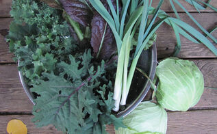 veggies that can handle frosts and even snow, gardening