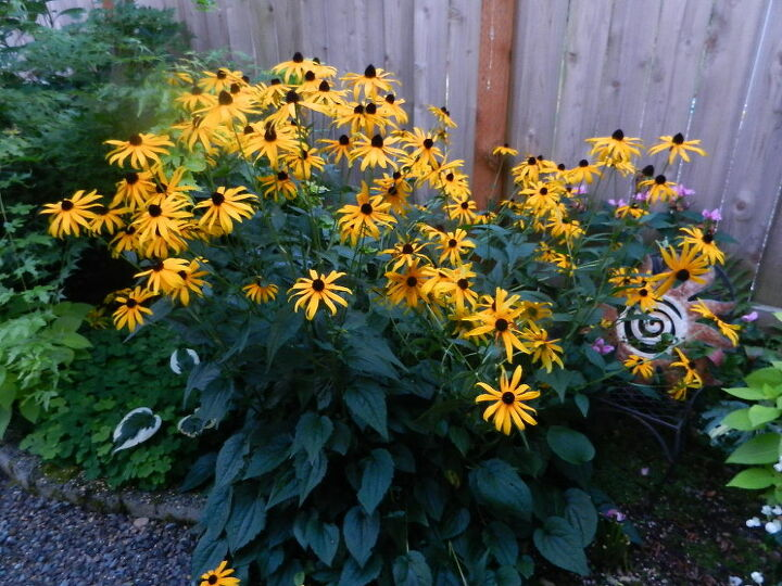 a big pop of yellow in my shady side of my garden, flowers, gardening