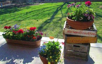 spring is springing finally, flowers, gardening