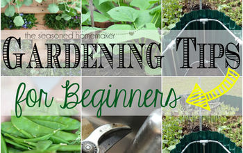 gardening tips for beginners, flowers, gardening