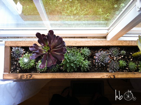 How to Make a Succulent Window Box | Hometalk