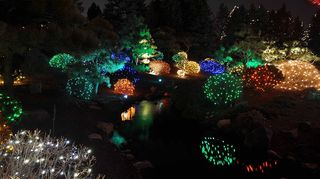 q large yard, gardening, landscape, outdoor living, Japanese garden with holiday lights