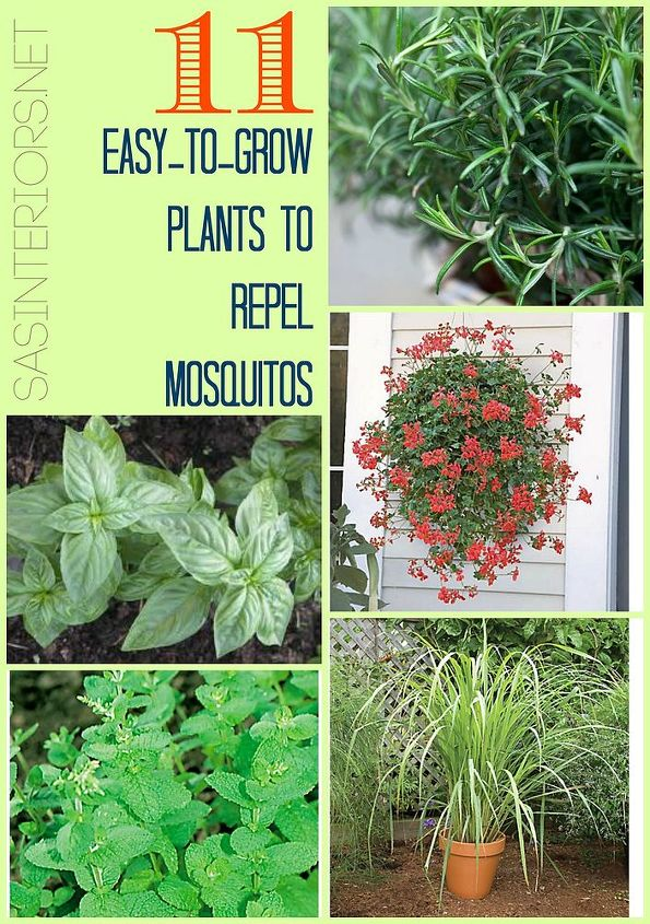 11 easy to grow plants to repel mosquitos, gardening, pest control