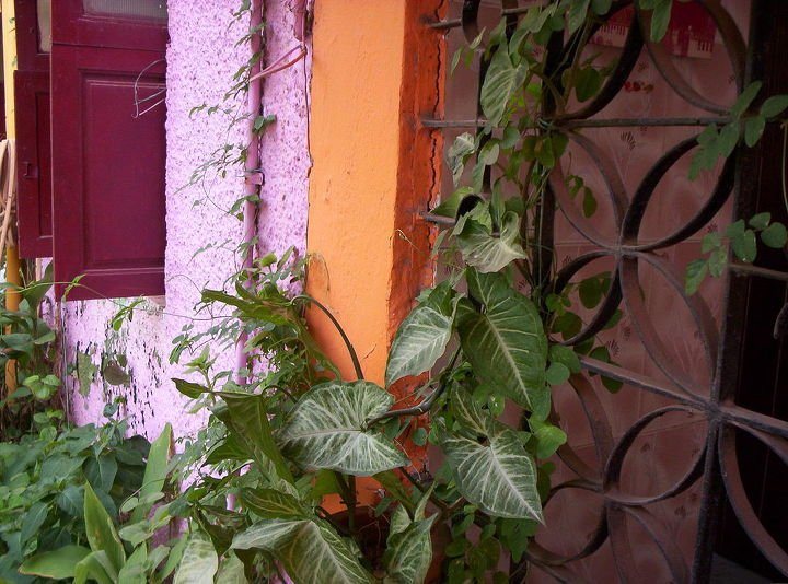 my mini gardens, gardening