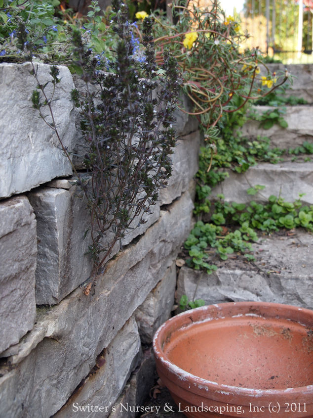 Steps can act as built in seating... The natural stone steps under the arbor are a perfect place to take a quick break from gardening and survey your accomplishments.  Strawberries where planted at the top of the wall for a neat treat.