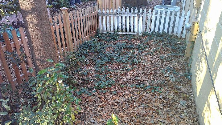 I was thinking of planting the hydrangeas along the unpainted fence. The neighbors have small bushes on the other side.