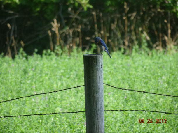 We have blue birds!