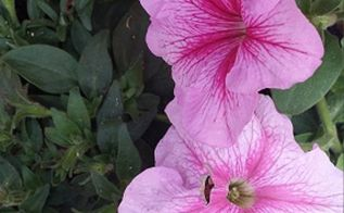 growing flowers and other garden tips, container gardening, flowers, gardening
