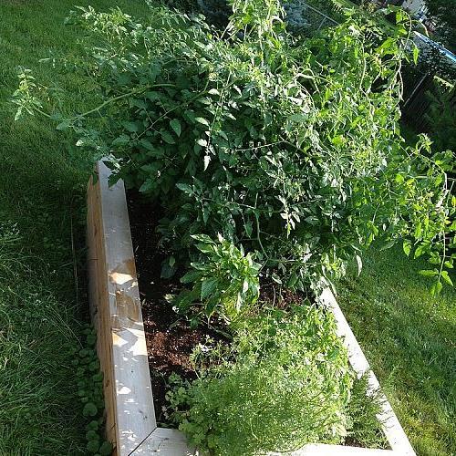 Raised Garden Bed #1 again