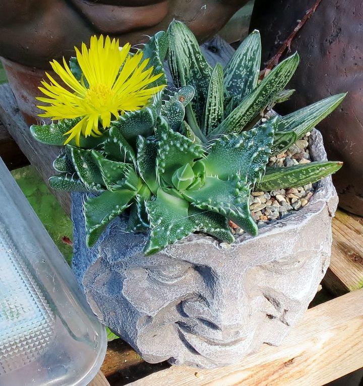 my garden in summer, flowers, gardening, hydrangea