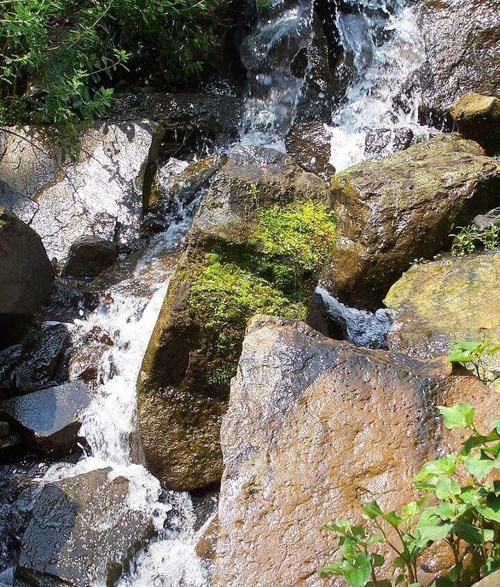 outdoor living water gardening, outdoor living, ponds water features
