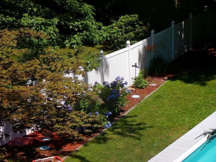 hydrangeas in bloom 2013, flowers, gardening, hydrangea