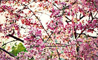 a garden tour of our spring blooms you won t be disappointed, gardening