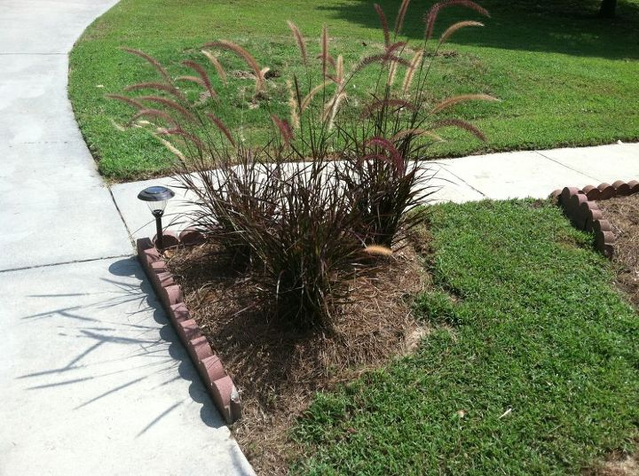 I love love love Purple Fountain grass! that went on the corner so it would be the first thing you see coming up the road.