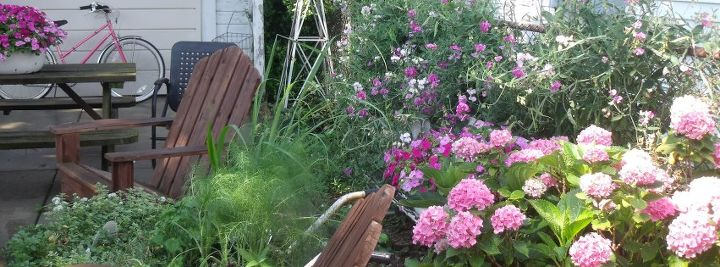 The herb garden at the end of summer!