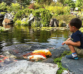 Backyard Ponds Make Fish Keeping Fun, Outdoor Living, Ponds Water Features,  Kids Are
