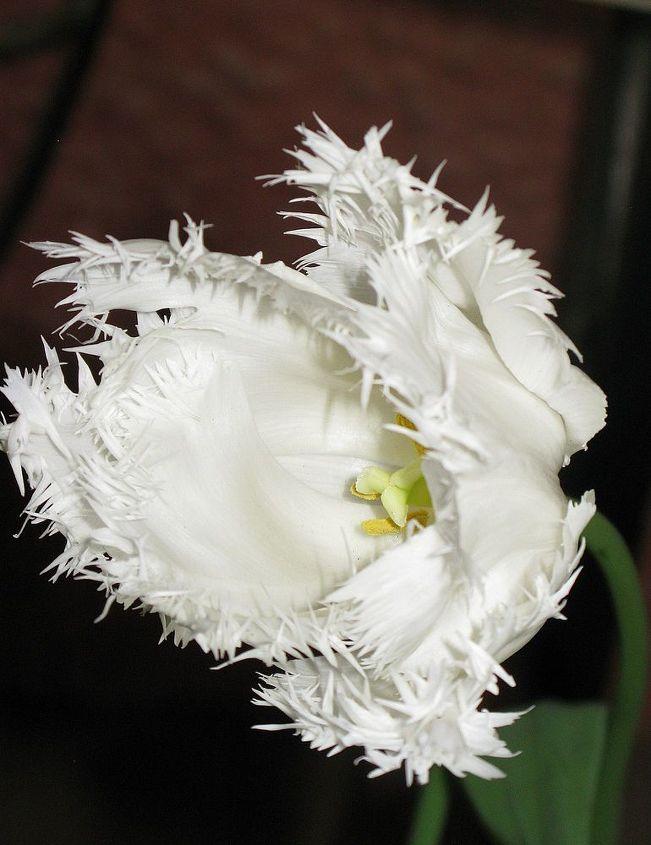leura garden festival kicks off this weekend i can t wait, flowers, gardening