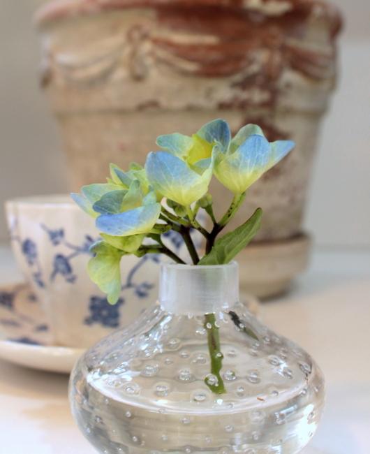 spring gardening hydrangeas, flowers, gardening, hydrangea