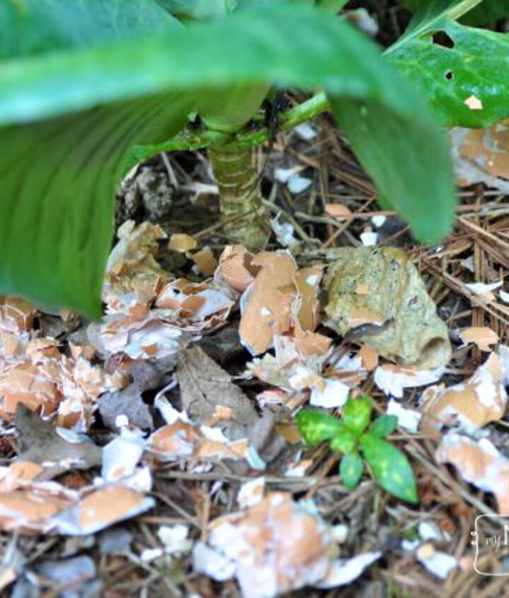 organic gardening how to deter slugs and snails with eggshells, gardening, pest control